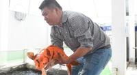 """Đà Nẵng: Một ông doanh nhân nuôi 3.000 con cá được xem như """"quốc ngư Nhật Bản"""", bắt lên con nào ai cũng xuýt xoa"""