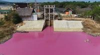 Bà Rịa - Vũng Tàu: Nguyên nhân đặc biệt khiến nước trong đầm biến thành màu hồng