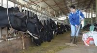 """[TRỰC TIẾP] Thăm trang trại bò sữa """"6 không"""" của nữ chủ nhân 8X"""