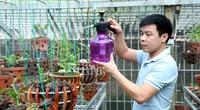 Cơn sốt hoa lan đột biến: Tỉnh Vĩnh Phúc có bao nhiêu vườn lan đột biến, huyện nào có nhiều vườn lan đột biến nhất?