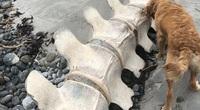 Bộ xương khổng lồ được tìm thấy ở Scotland – liệu có phải là của quái vật hồ Loch Ness?