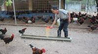 Giá gia cầm hôm nay 23/4: Giá vịt thịt, gà trắng tiếp tục giảm nhẹ, chuyên gia đưa ra dự báo gì?