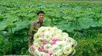 Trồng sen tỏa hương, khoe sắc, người dân Ninh Bình thu hàng trăm triệu đồng/năm