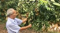 Ứng dụng công nghệ cao, nông nghiệp Hoài Đức có nhiều đột phá
