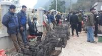 """Lên Sơn La đi chợ phiên Muổi Nọi """"săn"""" lợn cắp nách đặc sản bé tý, mấy loài côn trùng lạ, rau rừng tươi xanh"""