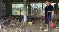 Hải Dương: Anh nông dân khuyết tật cả chân và tay trồng keo, nuôi gà lãi cả trăm triệu mỗi năm