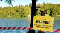 Độc tính gây chết người được phát hiện trong tảo có khả năng rò rỉ trong không khí