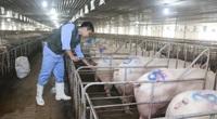 Bất cập từ việc cắt giảm 6.400 cán bộ thú y, lãnh đạo Cục Thú y nói gì?
