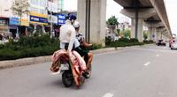 """Những con lợn """"khỏa thân"""" vắt vẻo trên xe máy rong ruổi trên những tuyến đường ở Thủ đô"""