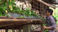 Đồng Nai: Vỗ béo 1.000 con tai dài bằng lá so đũa, mỗi năm ông nông dân này lãi 1,5 tỷ