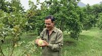 Nghệ An: Từng bị kết án tù chung thân, người đàn ông này làm thế nào mà thành nông dân giỏi?