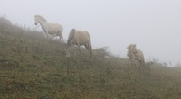 """""""Vén mây"""" đi tìm bạch mã xứ Lạng (kỳ 2): Thong dong vó ngựa ở Khau Sao"""