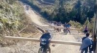 Vụ phá rừng pơ mu Vườn Quốc gia Hoàng Liên: Bất hợp lý trong báo cáo của Vườn Quốc gia