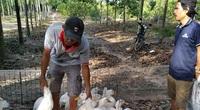 Giá gia cầm hôm nay 4/5: Giá gà công nghiệp tăng nhẹ, người nuôi vịt phía Nam vẫn có lời