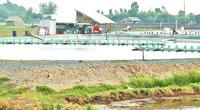 Long An: Dân vùng nước ngọt rải 20 tấn muối xuống ao để nuôi con gì mà khiến chính quyền nghiêm cấm?