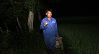 Chuyện lạ Nghệ An: Săn bắt lươn đồng trên thửa ruộng bậc thang, dân nấu lươn đồng thành món đặc sản lạ miệng