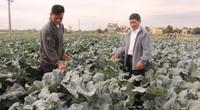 Hơn 400 mô hình kinh tế nuôi con đặc sản, trồng rau quả an toàn đem thu nhập cao cho nông dân Hải Dương