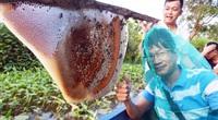 Về U Minh Hạ, lội rừng ăn ong lấy mật, thưởng thức vô số đặc sản trứ danh