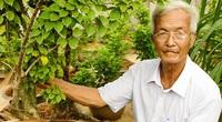 Chuyện lạ Bến Tre: Trồng hoa giấy lấy rễ, rễ càng to dài càng lắm tiền, một ông tỷ phú nông dân phát tài