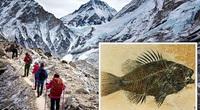 Hóa thạch biển được tìm thấy trên đỉnh Everest có thể là bằng chứng của Đại hồng thủy