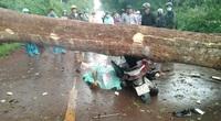 Mưa lớn khiến cây rừng đổ ngã, 2 phụ nữ thương vong