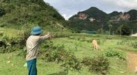 Nghệ An: 153 hộ dân kêu cứu vì đất sụt, giếng cạn trơ đáy bất thường
