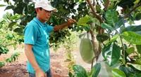 """Kon Tum: Vườn """"trồng lung tung"""" mà vẫn kiếm bộn tiền, ông nông dân bất ngờ tiết lộ điều này"""