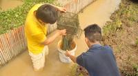 Bất ngờ ao nuôi cua đồng ở tỉnh Đồng Nai, bắt lên toàn cua ngon, vàng ươm