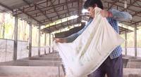 """Giá thức ăn chăn nuôi tăng """"chóng mặt"""": Nông dân tự trộn thức ăn để tránh lỗ"""