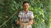 """""""Liều"""" nuôi cá lăng đuôi đỏ trong ao đất, bất ngờ ông nông dân Bà Rịa-Vũng Tàu lãi hàng trăm triệu đồng"""