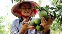 Đáng nể ông nông dân kiếm 8 tỷ đồng mỗi năm từ kinh tế vườn trại