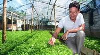 Quảng Nam: Trồng thứ rau dại trước kia mọc vạ vật xó vườn, ăn chống đói, nay là đặc sản bán đắt như tôm tươi