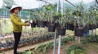 Có bao nhiêu loài lan rừng ở tỉnh Khánh Hòa, tỉnh này đang chi tiền bảo tồn bao nhiêu loài lan rừng quý hiếm?