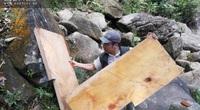 Chủ tịch UBND tỉnh Lào Cai: Sai phạm rõ ràng, xử lý nghiêm, không bao che vụ phá rừng Hoàng Liên