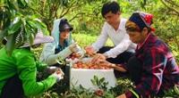 Sơn La muốn đón thương nhân Trung Quốc lên khảo sát tiêu thụ xoài sau khi thu mua xong vải Bắc Giang