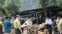 Vụ phá rừng pơ mu Vườn Quốc gia Hoàng Liên: Kiểm lâm phối hợp với Công an tạm giữ 257 súc gỗ pơ mu