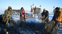 Phương pháp đánh cá cổ đại của người Mông Cổ có thể bắt được hàng ngàn con cá mỗi ngày