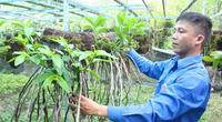 Cao Bằng: Ngắm vườn lan rừng quý hiếm của chàng trai tốt nghiệp Đại học Văn hóa nghệ thuật Quân đội bỏ phố về quê