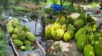 Giá mít Thái hôm nay 16/5: Chủ vựa mua mít tỉnh Tiền Giang nói điều bất ngờ gì khiến nông dân thở phào nhẹ nhỏm?