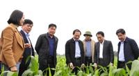 """Những cuộc """"cách mạng"""" trên đất lúa kém hiệu quả (Bài 5): Đổi mới trong tư duy, sáng tạo trên đồng ruộng"""