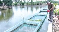 Thái Bình: Nuôi cá rô đồng dày đặc trong ao, bắt bán hàng tấn, một nông dân thành tỷ phú