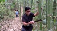 Thanh Hóa: Ở nơi xa xôi hẻo lánh này, dân trồng cây gì mà thân thẳng tuồn tuột, cứ chặt là có tiền?