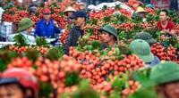 Hơn 100 thương nhân Trung Quốc được vào Việt Nam mua vải thiều Bắc Giang