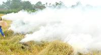 Chủ tịch Thừa Thiên- Huế yêu cầu lập đường dây nóng để xử lý tình trạng đốt rơm rạ sau thu hoạch