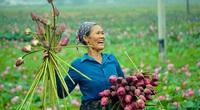 """Thanh Hóa: Trồng loài hoa """"vạn người mê"""" tỏa hương thơm ngát thay trồng lúa, cặp đôi U70 bỏ túi hàng chục triệu đồng"""