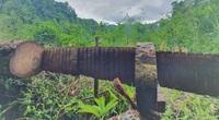 Video: Cận cảnh rừng nghiến cổ thụ Vườn Quốc gia Du Già (Hà Giang) bị tàn phá