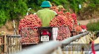 Nông sản đầu tiên của Việt Nam được chỉ dẫn đại lý tại Nhật Bản