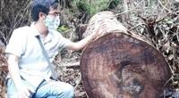 Chủ tịch UBND tỉnh Hà Giang vào hiện trường vụ phá rừng nghiến ở Vườn Quốc gia Du Già