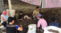 Hòa Bình: Đáng buồn, trồng bí trái to, khoai sọ đào lên hàng chục tấn, vì sao nông dân bấm bụng bán rẻ mạt?