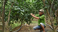 Vựa lúa sống cùng nỗi lo cây - con mới: 4 vấn đề để sản xuất bền vững (bài 4)